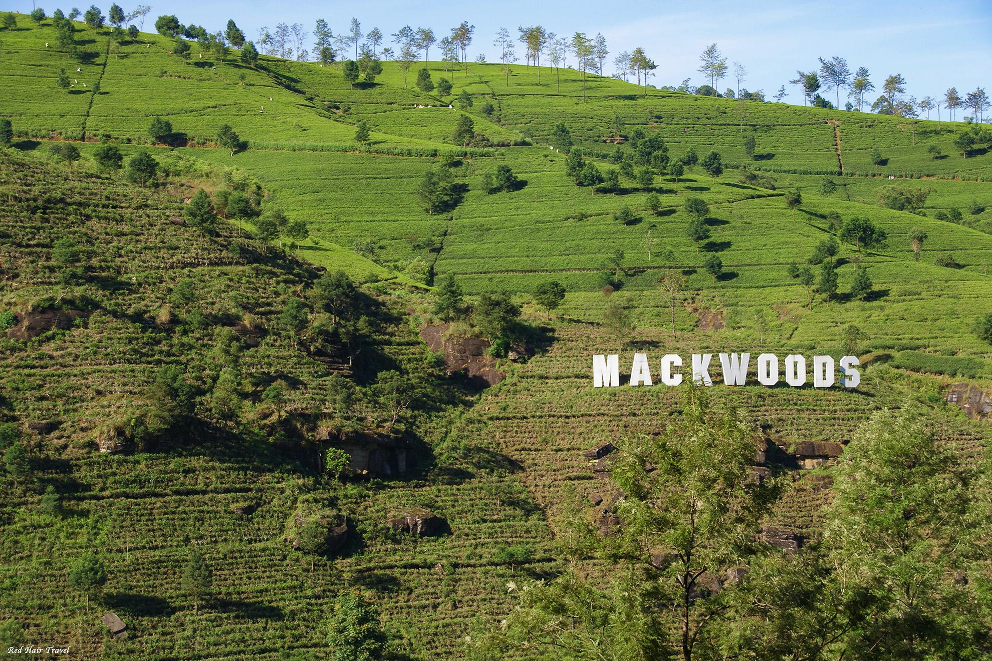 Нувара Элия: чайные плантации, водопады и клубника
