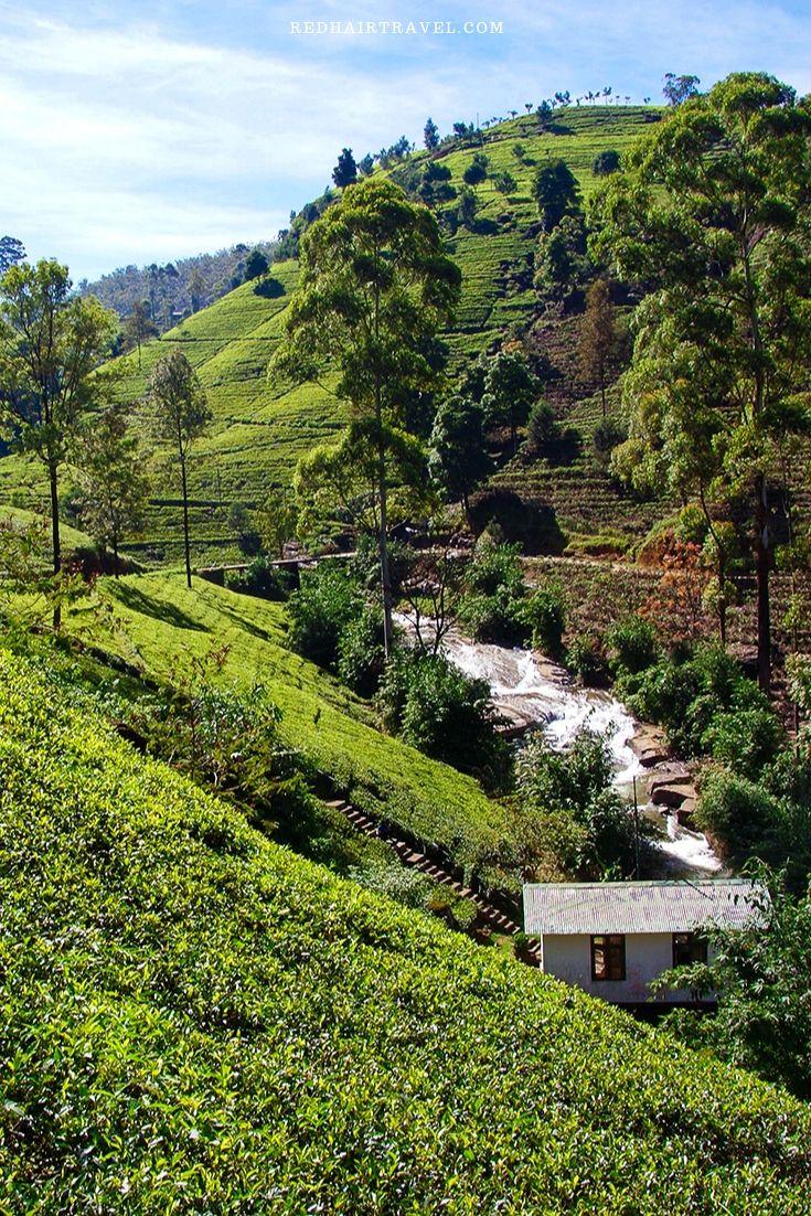 чайные плантации, Нувара Элия, Шри Ланка