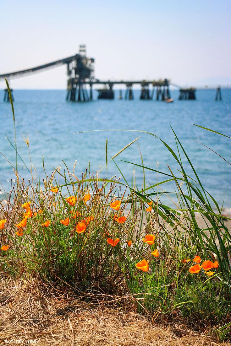 Набережная (Trail Bay waterfront), Сешелт, саншайн кост
