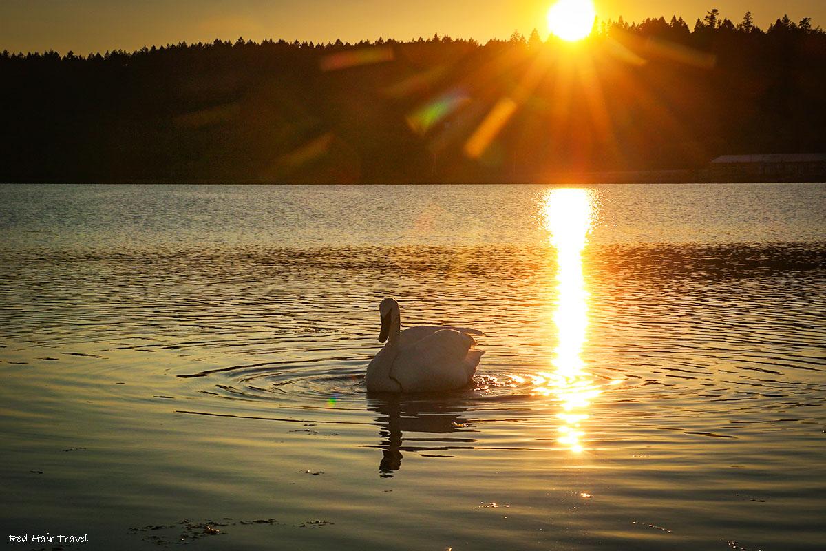 Лагуна Эсквимолт (Esquimalt Lagoon) в Виктории