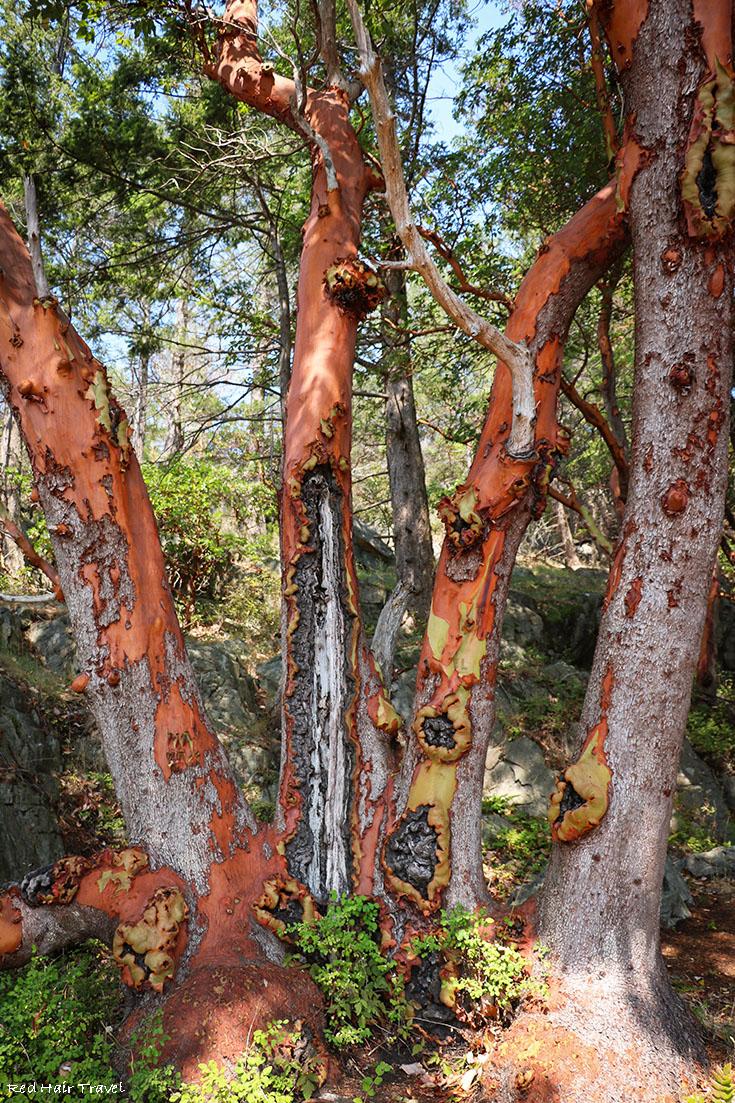 Хайкинг на острове Beaver (Francis Point Provincial Park), саншайн кост, земляничное дерево