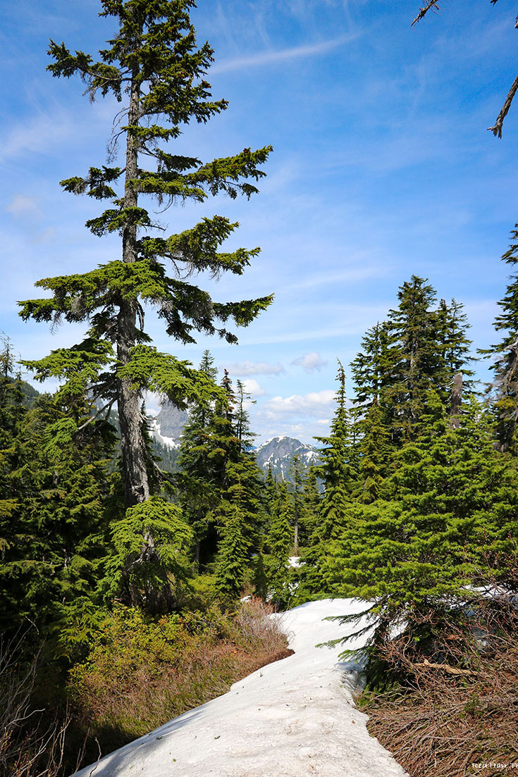 St Mark's summit (Cypress)