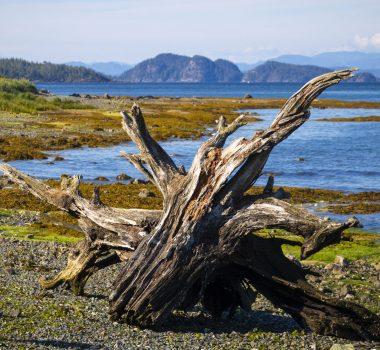 Остров Ванкувер: дикий, дикий север