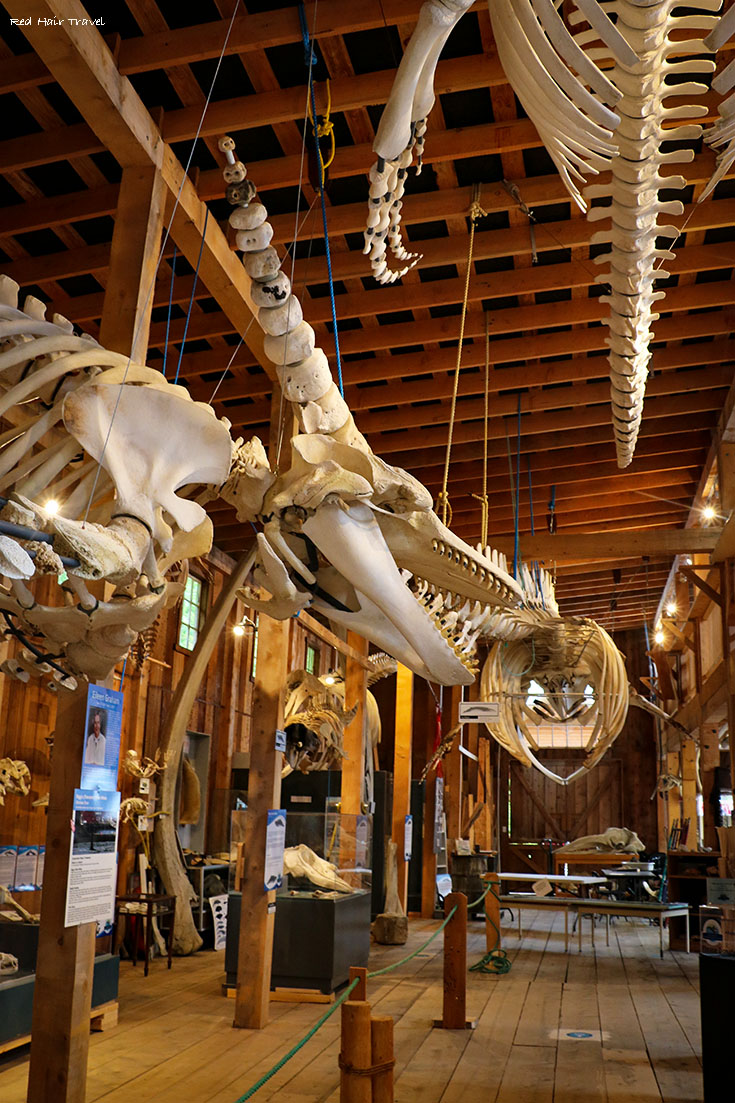Whale Museum, Telegraph Cove, North Vancouver Island