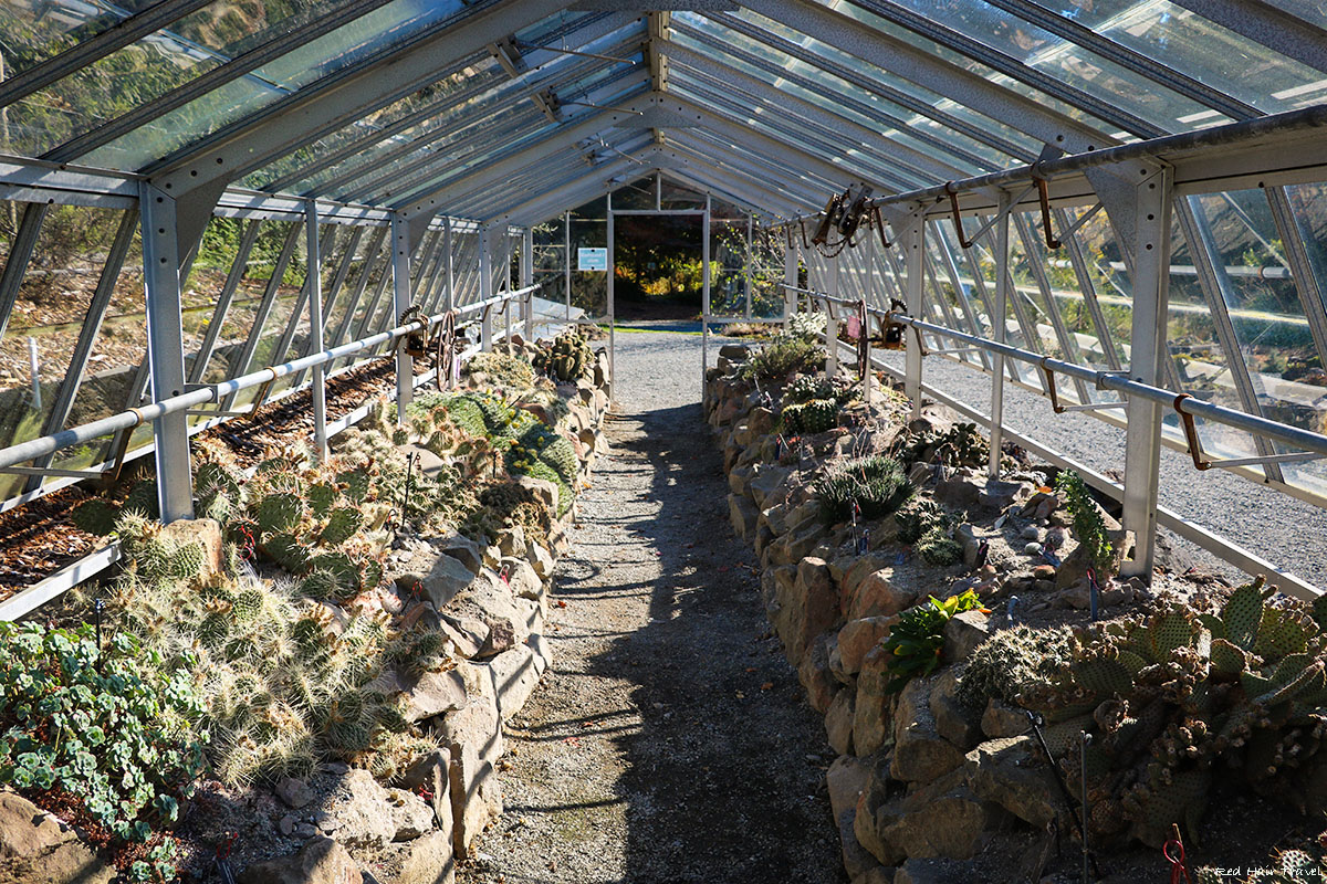 дом кактусов