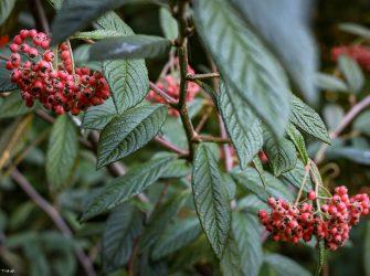 Ботанический Сад Университета Британской Колумбии